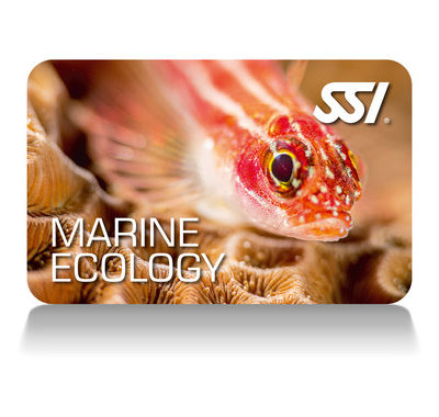 JOIN OUR MARINE ECOLOGY COURSES<
